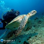 scuba diving with turtle in Mauritius